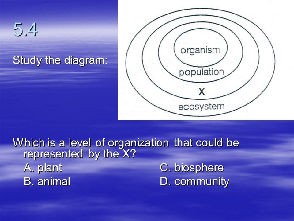5.4 Study the diagram: Which is a level of organization that could be represented by the X A. plant C. biosphere.