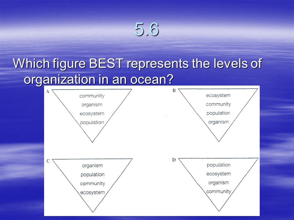 5.6 Which figure BEST represents the levels of organization in an ocean