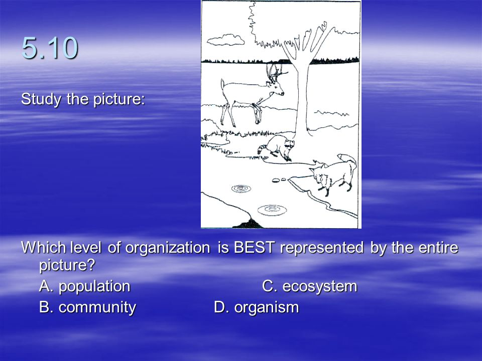 5.10 Study the picture: Which level of organization is BEST represented by the entire picture A. population C. ecosystem.