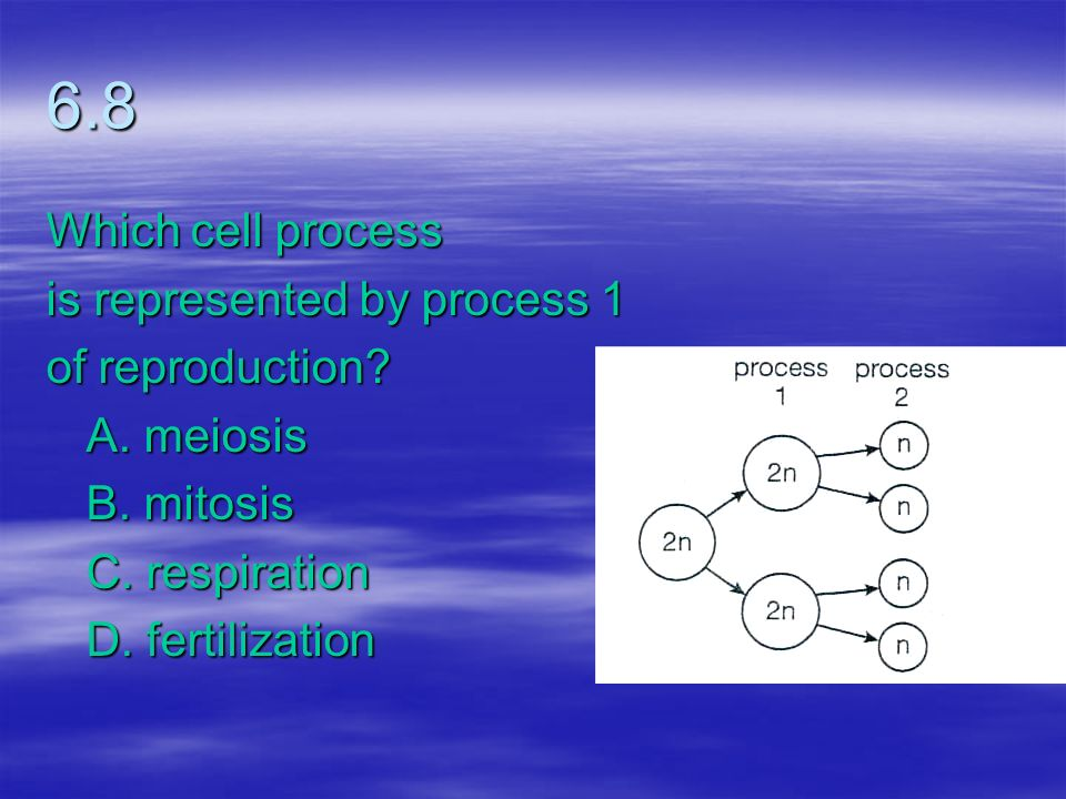 6.8 Which cell process is represented by process 1 of reproduction