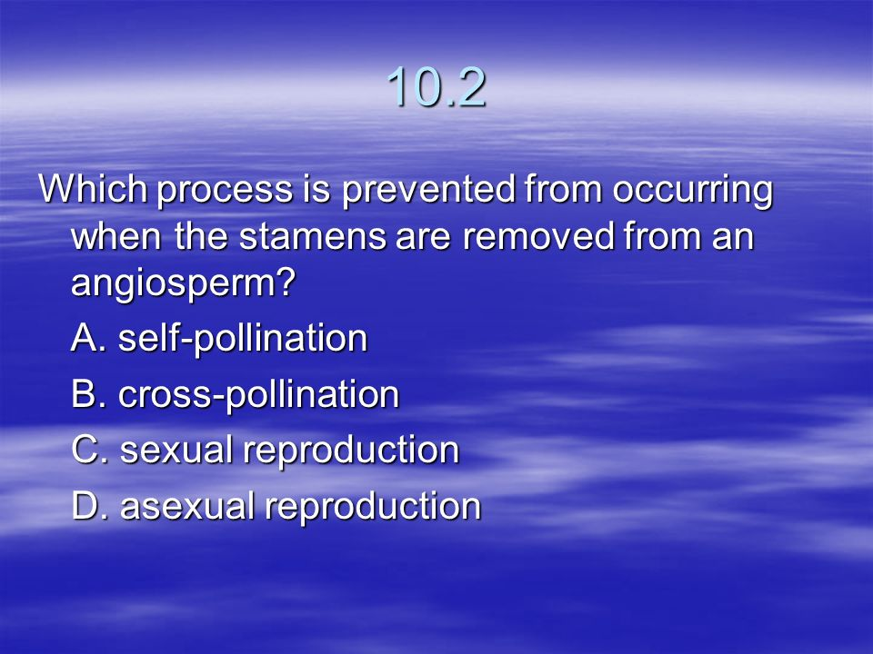 10.2 Which process is prevented from occurring when the stamens are removed from an angiosperm A. self-pollination.