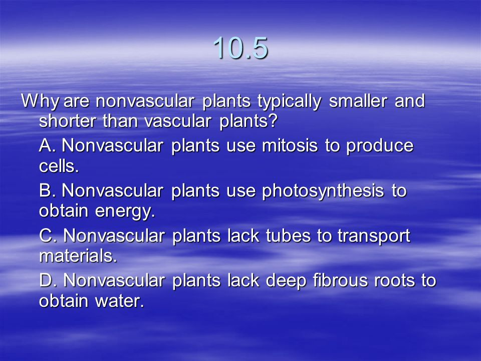 10.5 Why are nonvascular plants typically smaller and shorter than vascular plants A. Nonvascular plants use mitosis to produce cells.