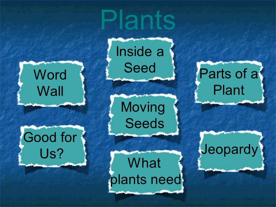Plants third grade unit ppt download for Soil jeopardy