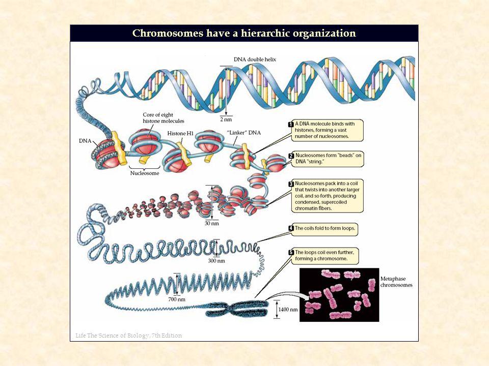 molecular biology of the gene 7th edition pdf