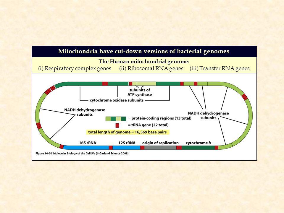 molecular biology of the gene 6th edition pdf download