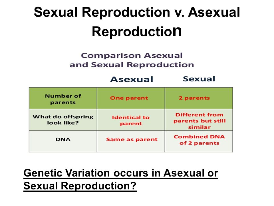 Why Sexual Reproduction Is A Source Of Genetic Variation