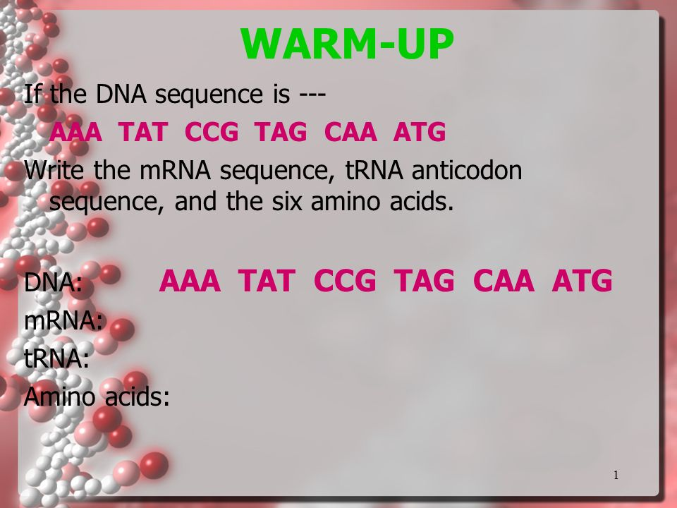 WARM-UP If the DNA sequence is --- AAA TAT CCG TAG CAA ATG ...