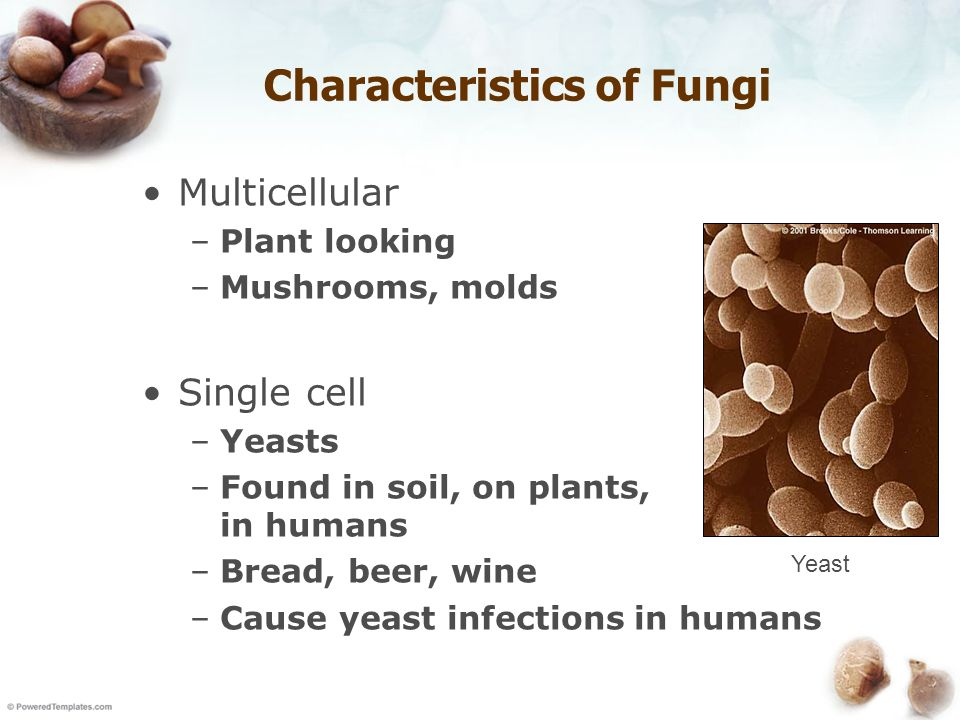 detection of fungal infections in plants [detection of 1 for diagnosis of fungal infections h wild plants and their parts are frequently used to treat these treat more severe fungal infections 3.