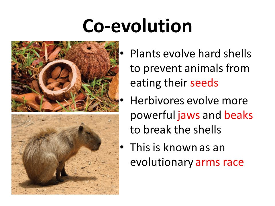 analysis evolutionary arms race Becoming human: series overview  (max planck institute for evolutionary anthropology):  the other analysis gives us the climate.