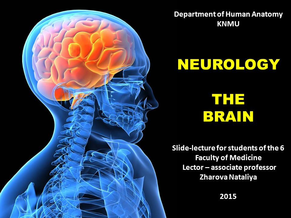 Department Of Human Anatomy Knmu Neurology The Brain Slide Lecture