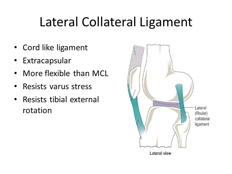Images of Lateral Collateral Ligament - #SpaceHero
