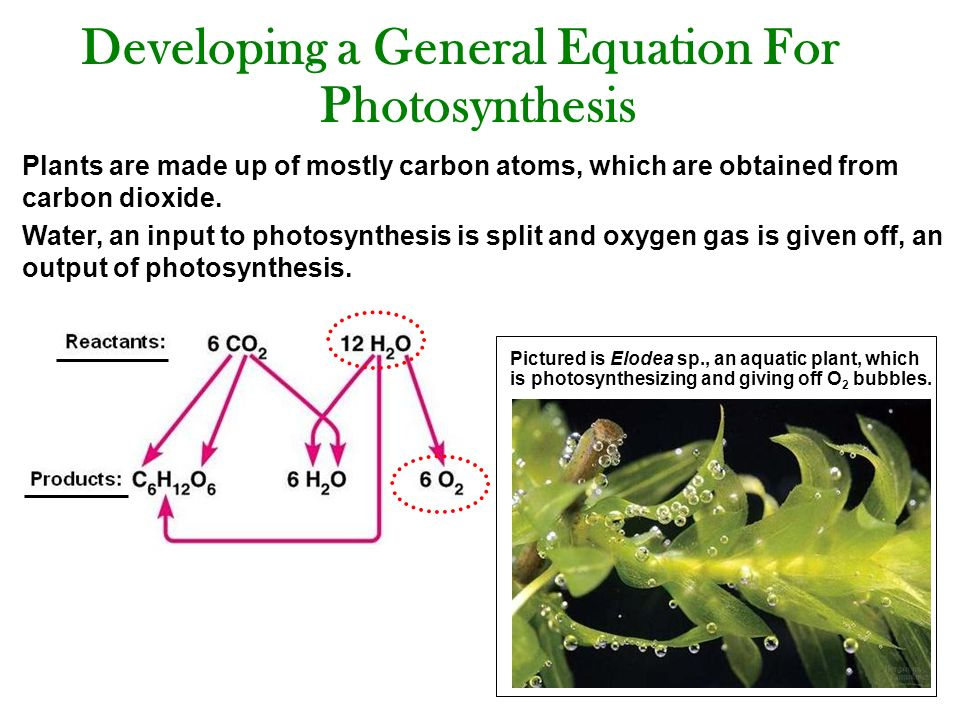 the equation for photosynthesis Here is the equation for photosynthesis: carbon dioxide + water (+ light energy) → glucose + oxygen 'light energy' is shown in brackets because it is not a substance you will also see the equation written like this: plants absorb water through their roots, and carbon dioxide through their leaves.