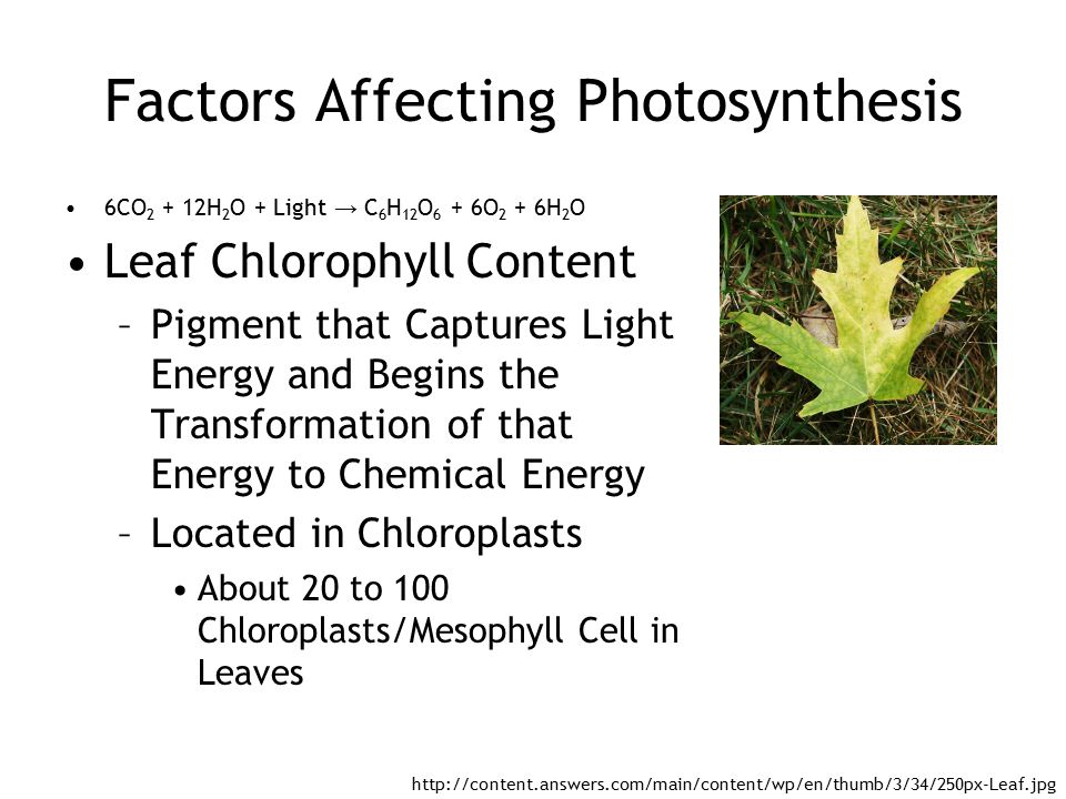 photosythesis energy Conditions for photosynthesis notes plants get co2 from the air through their leaves, and water from the ground through their roots light energy comes from the sun the oxygen produced is released into the air from the leaves the glucose produced can be turned into other substances, such as starch, which is used as a.