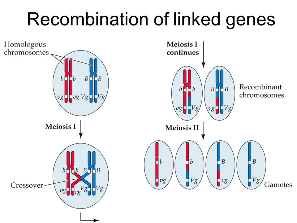how to tell if genes are linked