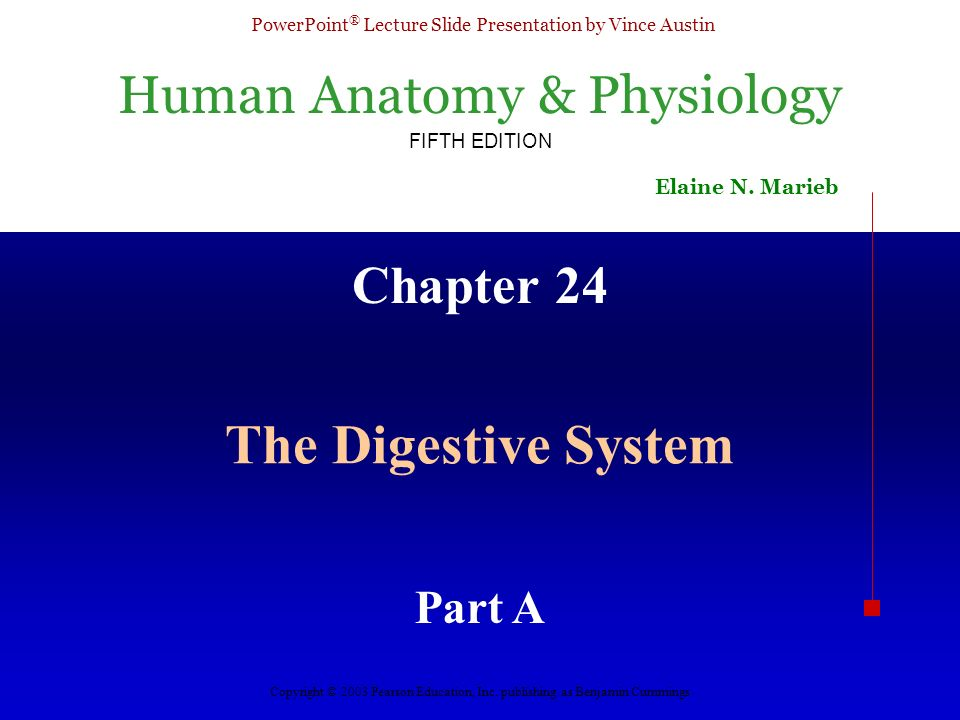 Chapter 24 The Digestive System Part A. - ppt video online download