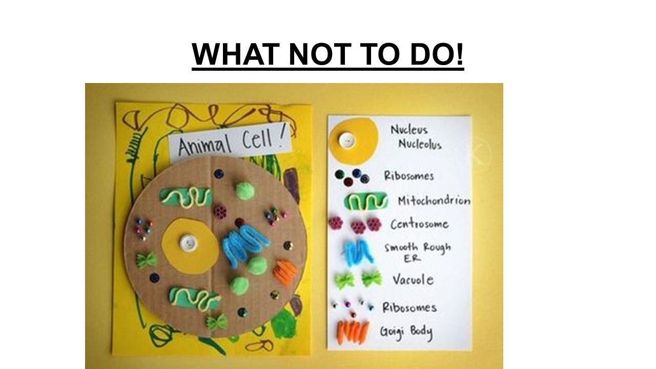 3d plant cell model project materials - 3 What Not To Do