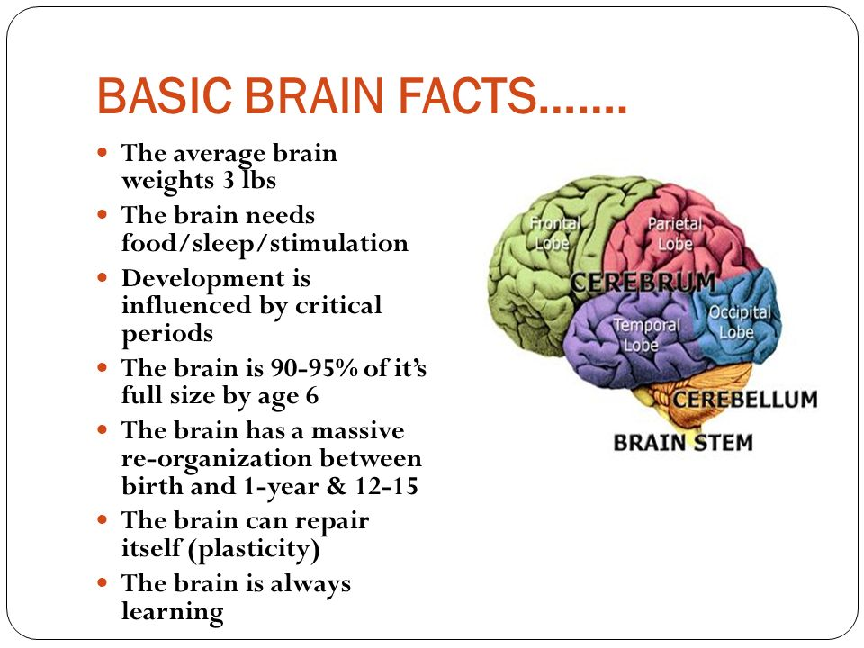 an analysis of our brains weigh about three pounds Secrets about the human brain all of the images are licensed under creative commons and public domain licensing: angeloromano svg drawing representing a.