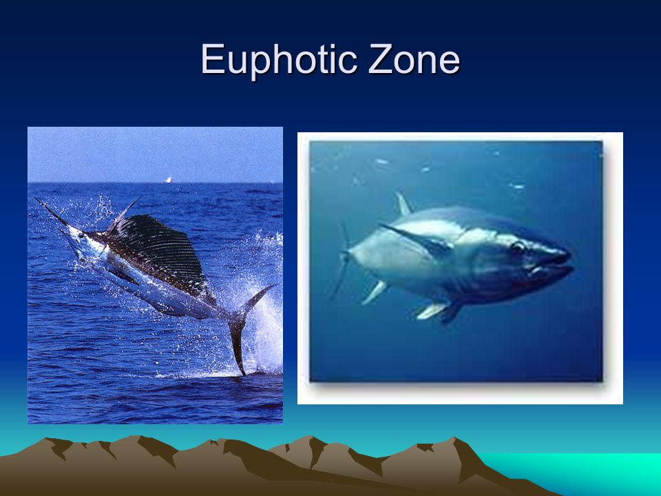 Aquatic Ecosystems. - ppt video online download | 960 x 720 jpeg 83kB