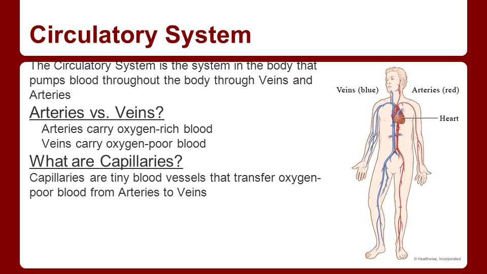 a description of blood as a fluid substance that circulates in the arteries and veins of the body