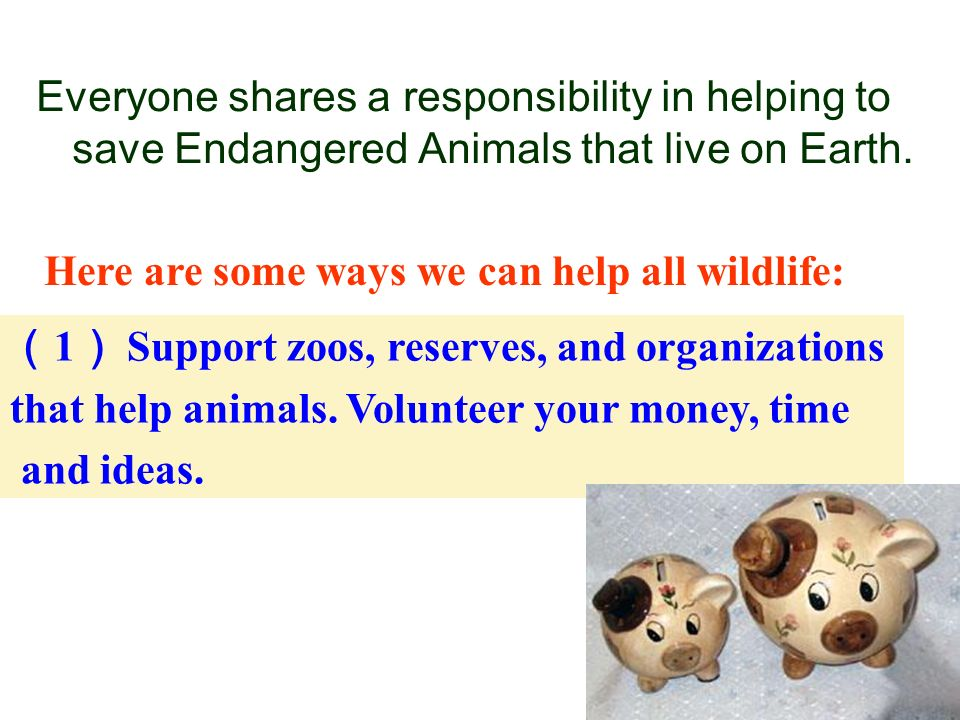 Responsibility To Save Endangered Species Essay – Fondos de Pantalla
