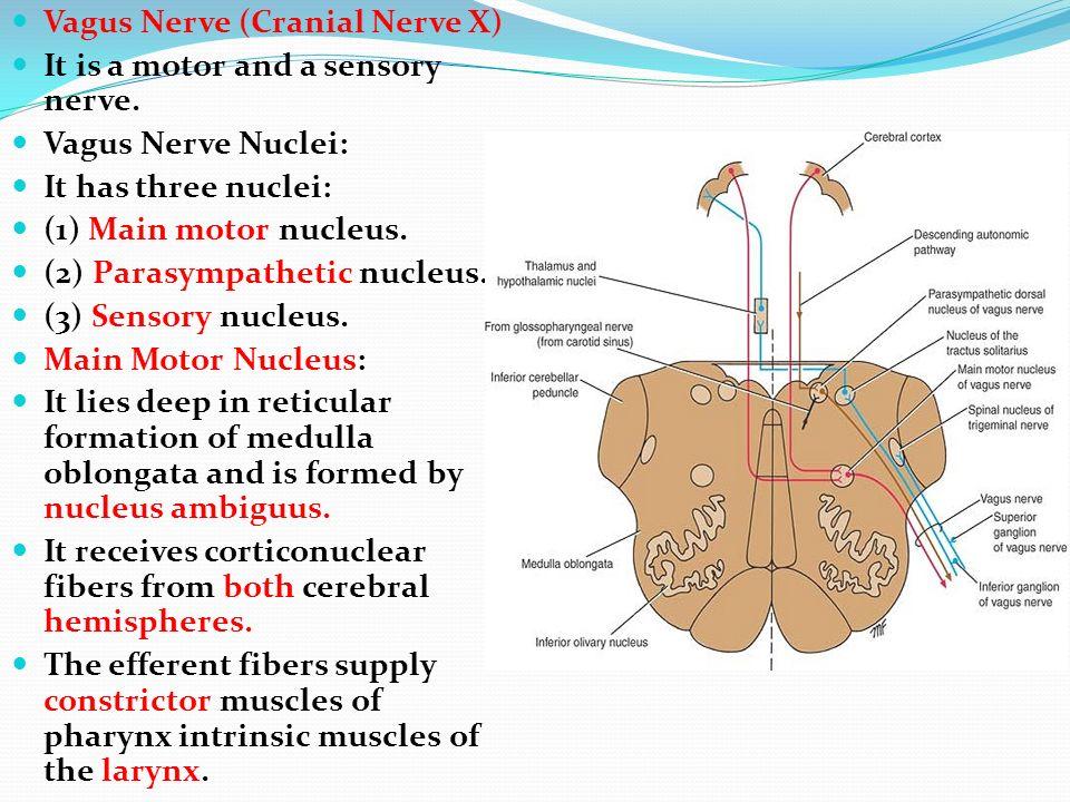Cranial nerve labanswers | College paper Academic Service ...