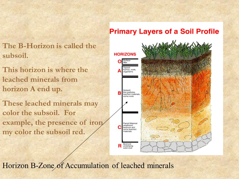 Soil much more than dirt ppt video online download for Soil zone of accumulation