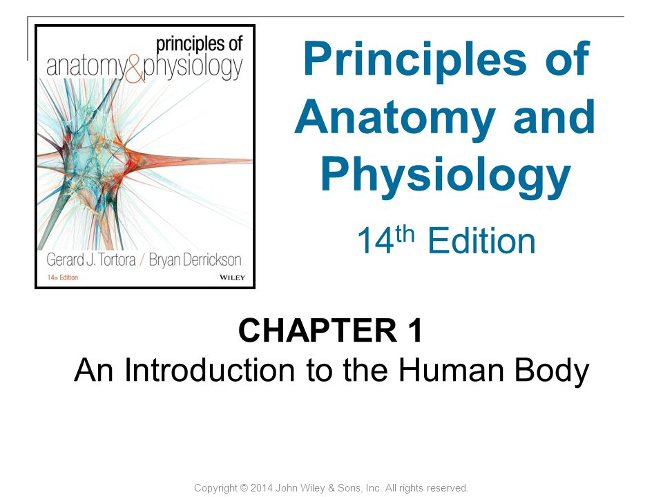 Berühmt Anatomy And Physiology Introduction To The Human Body Ideen ...