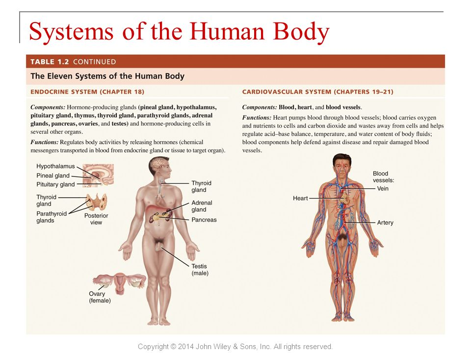 Fantastic Anatomy And Physiology 101 Ensign - Anatomy And Physiology ...