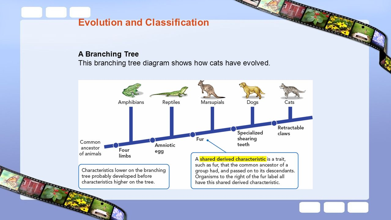 Evolution and classifications