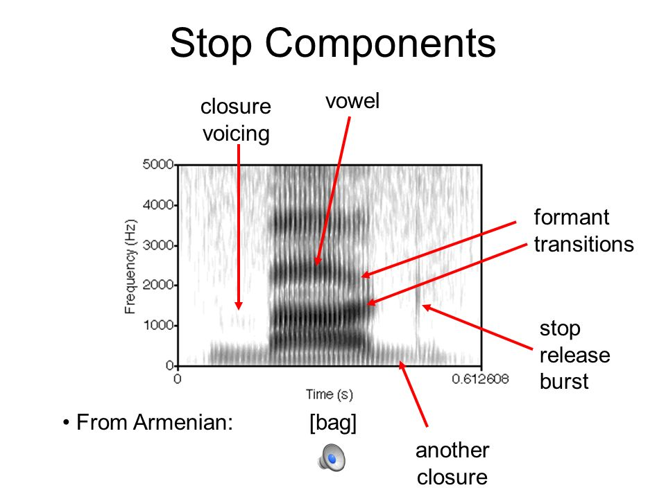 sonorant acoustics   place transitions