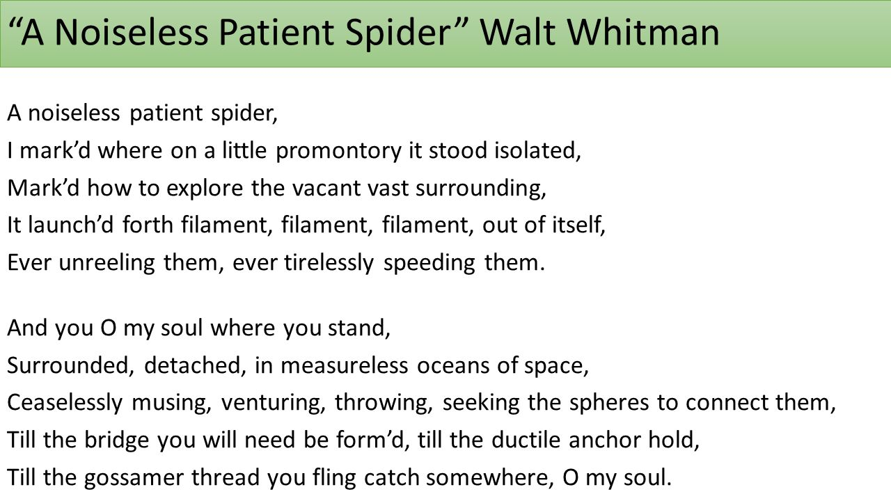 walt whitman a noiseless patient spider essay Poems study guide contains a biography of walt whitman, literature essays a ed walt whitman: poems essay questions a noiseless patient spider.