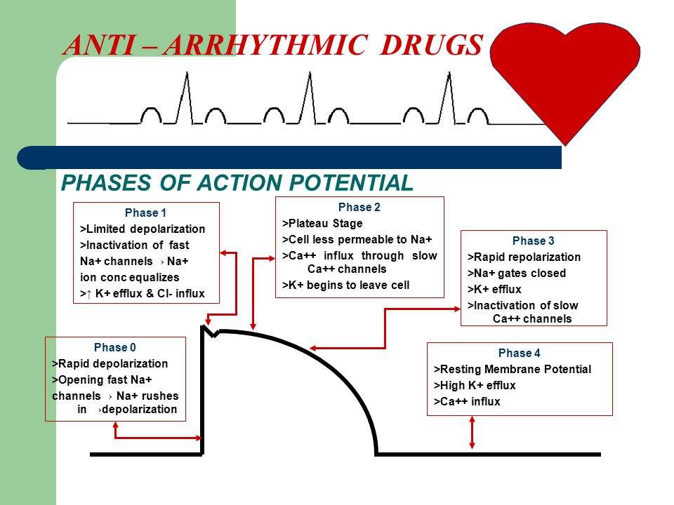 PHASES OF ACTION POTENTIAL