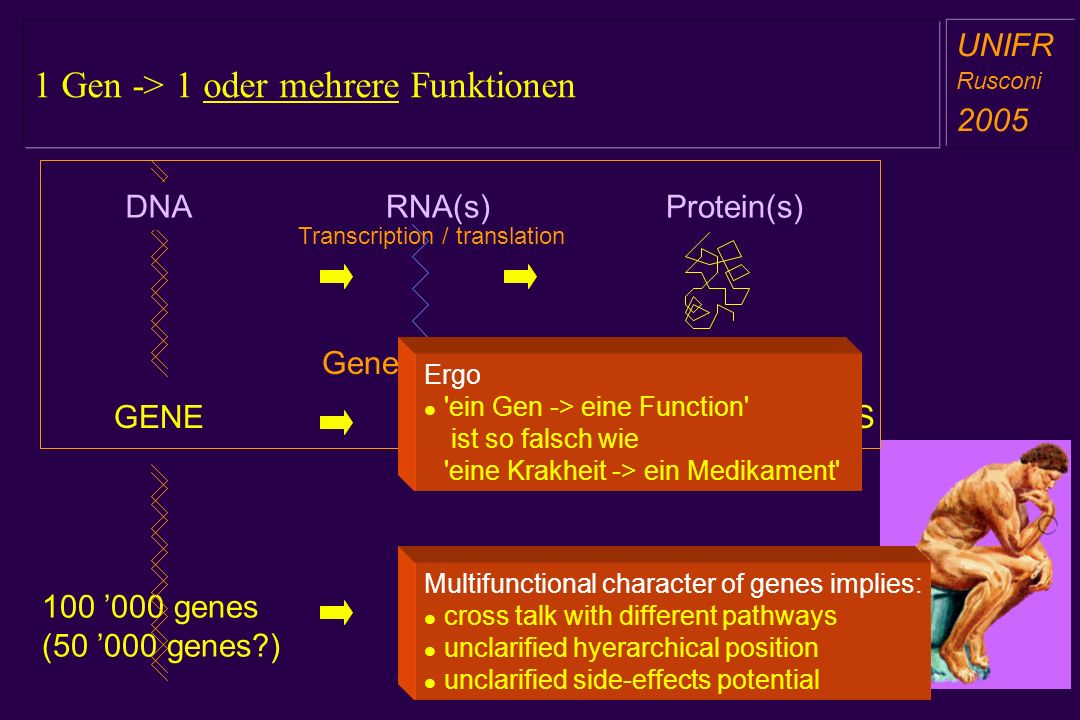 1 Gen -> 1 oder mehrere Funktionen