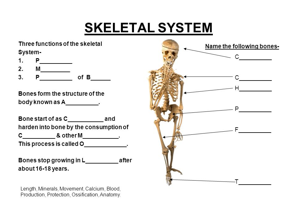 exploring the skeletal system Abcya a fun and interactive children's activity to learn the skeletal system students click and drag the names of major bones to the appropriate box in the skeletal diagram the number of attempts to complete the activity is recorded - the lower the score the better have a blast with this educational.