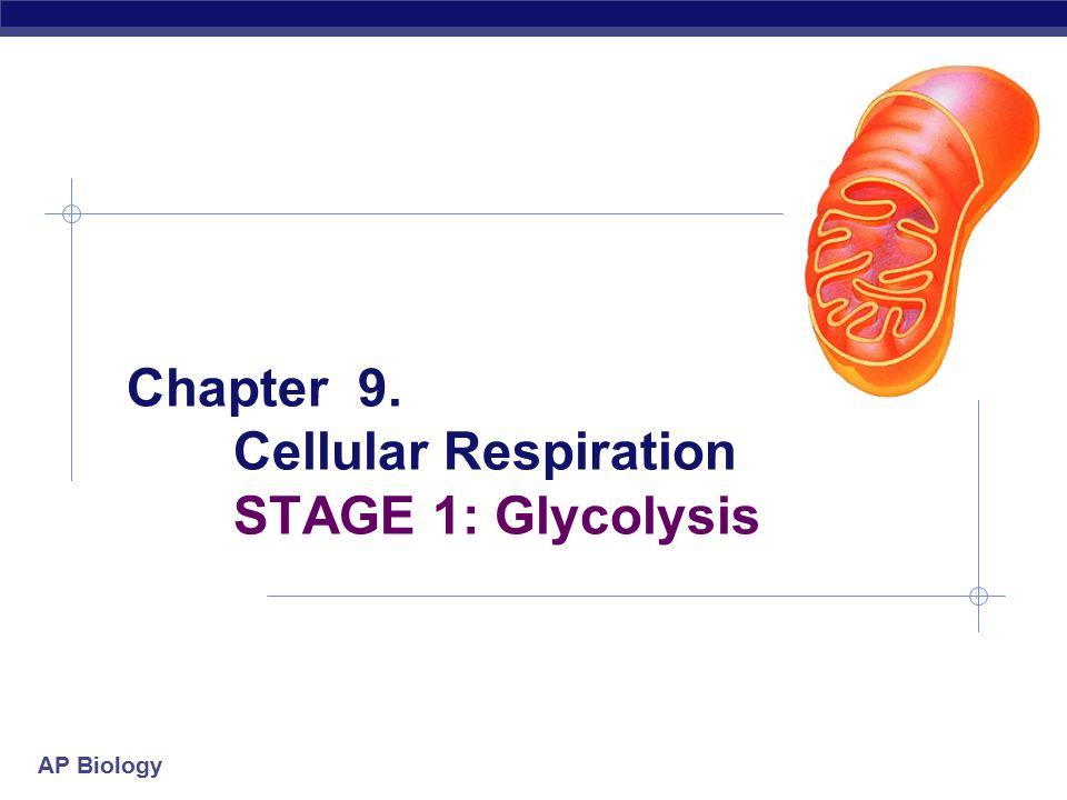 a study of cellular respiration