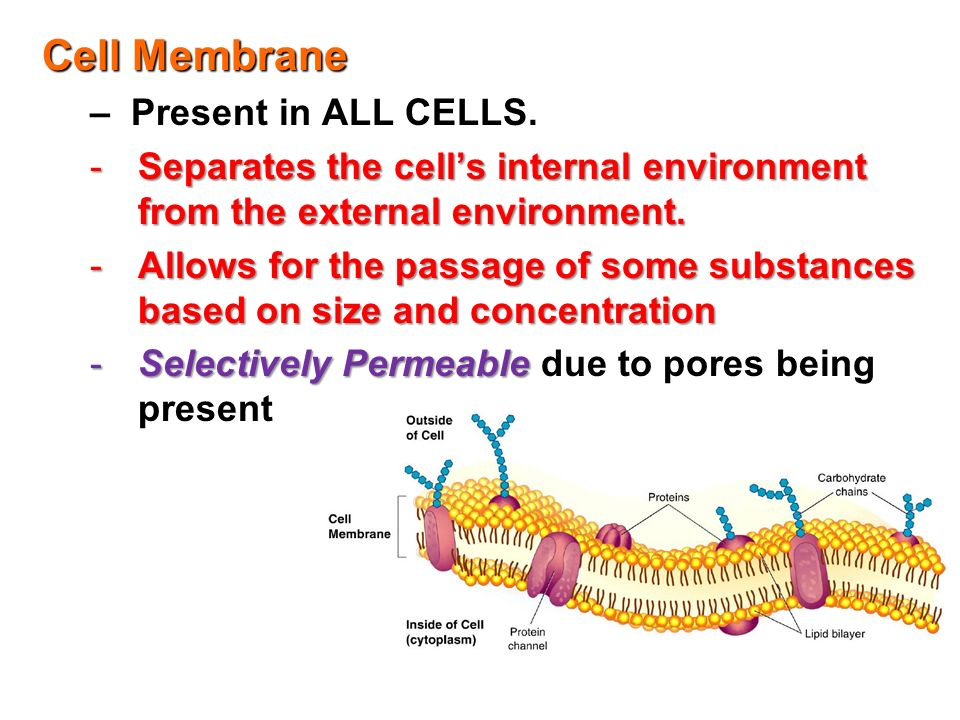 a study of the environment on the cell membrane The biological effect of tourmaline on the cell membrane of e coli by microcalorimetry, fluorescence polarization, ion analysis and fourier transform infrared was studied it was observed that tourmaline of low concentration can promote growth of the bacteria, while tourmaline of high concentration has inhibitory effects on e coli.