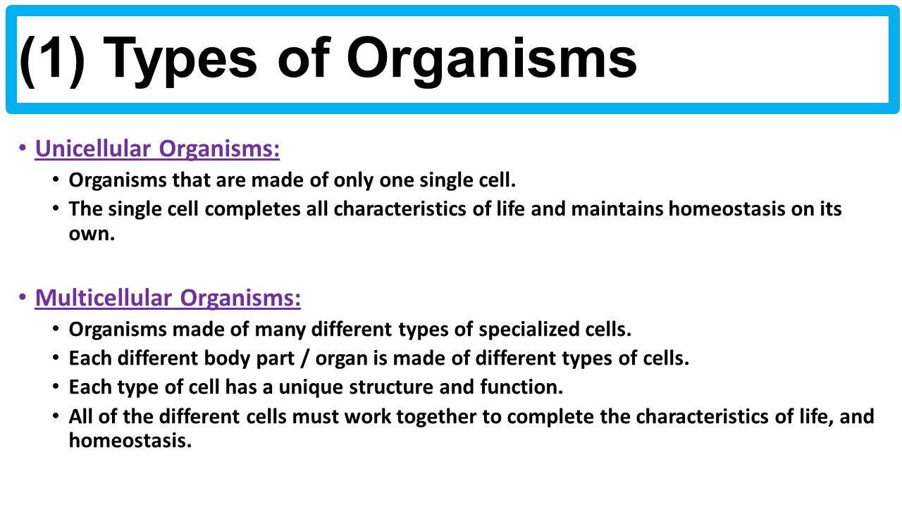 unicellular organism a type of life