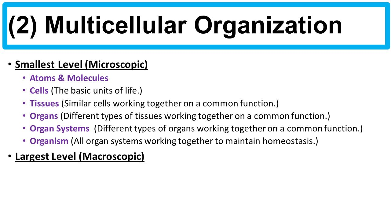 4 things cells do to maintain homeostasis - 4 2 Multicellular Organization