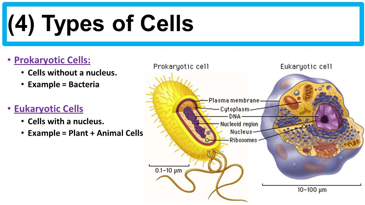 biology unit 1 notes: types of cells - ppt download, Human Body