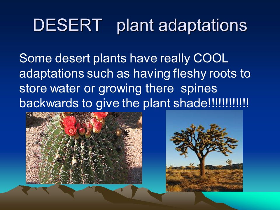 The weathers are snowy rainy dry - ppt video online download