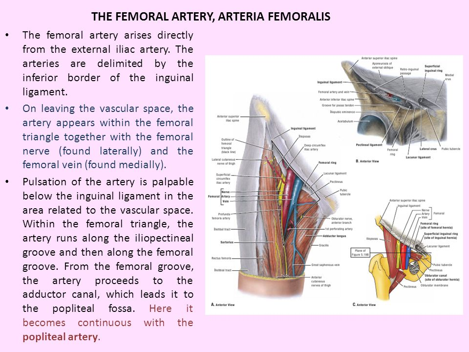 femoral artery vein and nerve relationship quiz