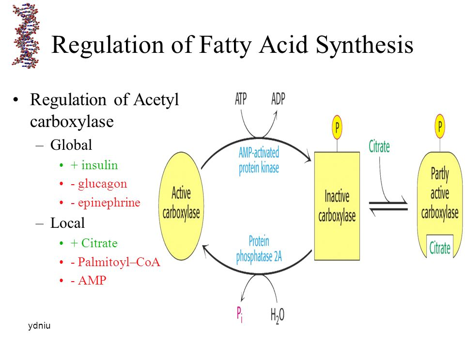 lipids fatty acid and amp Effects of dietary lipids on growth and fatty acid composition of rainbow trout (salmo gairdneri) texas a&ampm university system, college station, tx, usa (accepted.