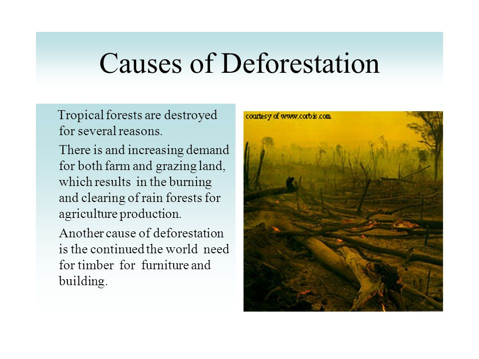 cause and effect of deforestation What are the causes and effects of deforestation what is global warming how is it linked to deforestation let us find out.
