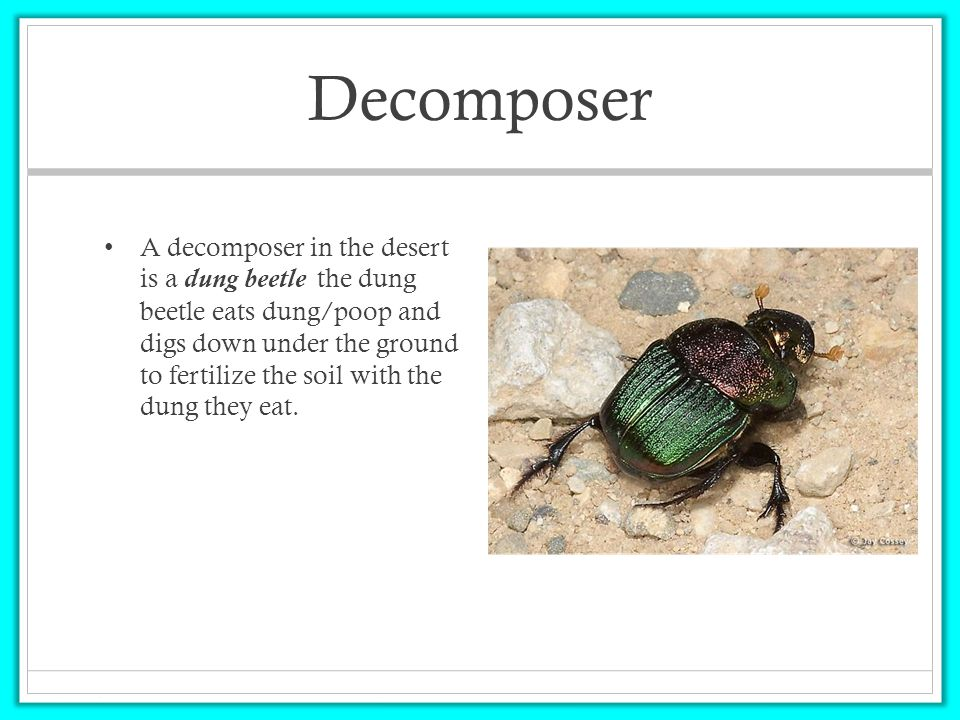 Desert Decomposers In Food Chain