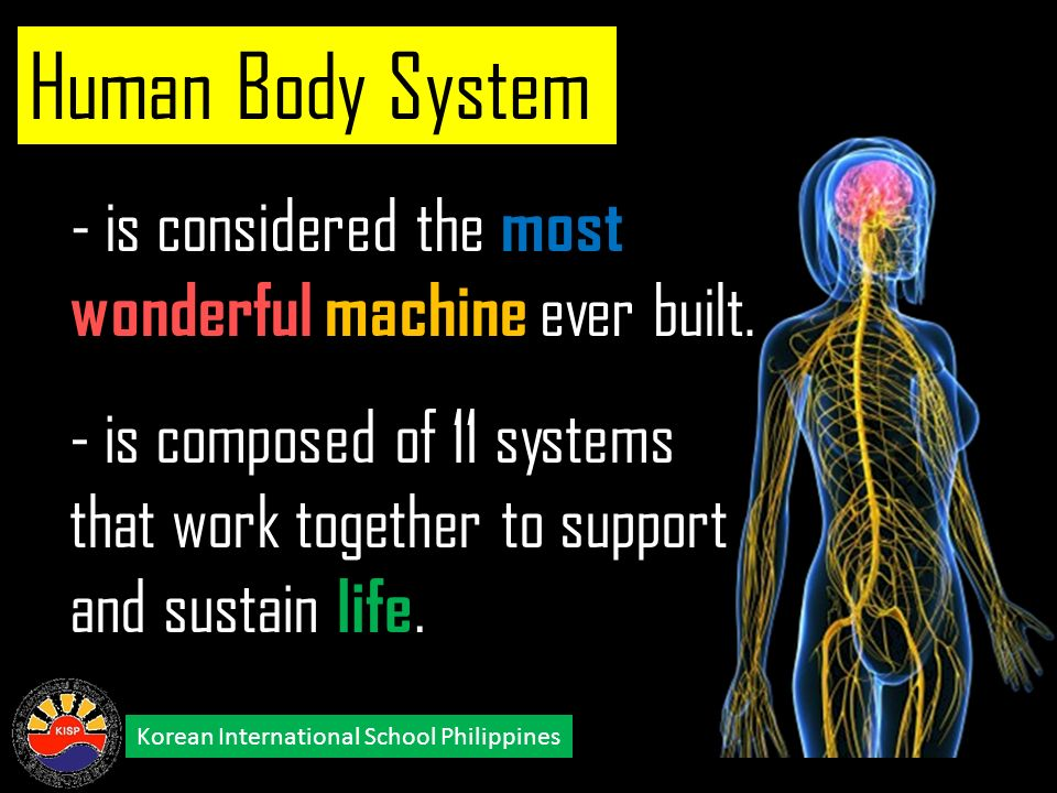 the human body a magnificent machine The human body is an intricately engineered machine to achieve peak operation the body employs intricately designed molecules, arranged in specific tissues, in different areas of the body.