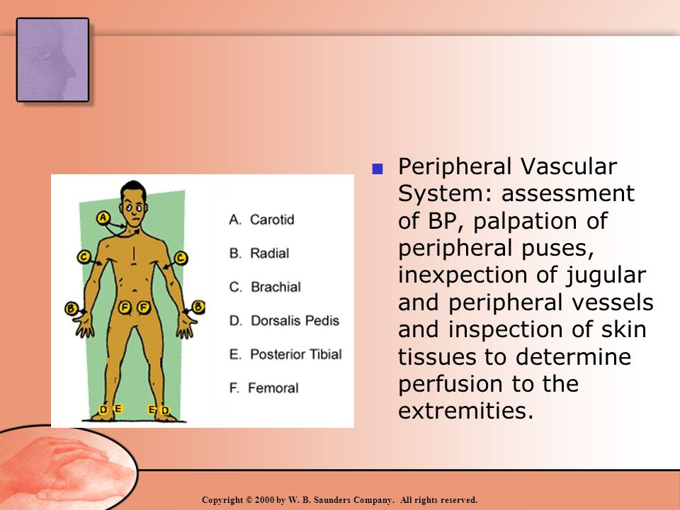 Physical Examination: Thorax - ppt video online download