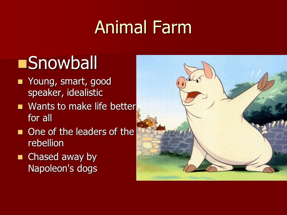 "animal farm snowball Finally, after the battle of the cowshed, the pigs discredit snowball of his medal, animal hero, first class ""animal farm essay."