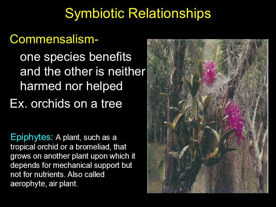 epiphytes and tropical trees symbiotic relationship worksheet