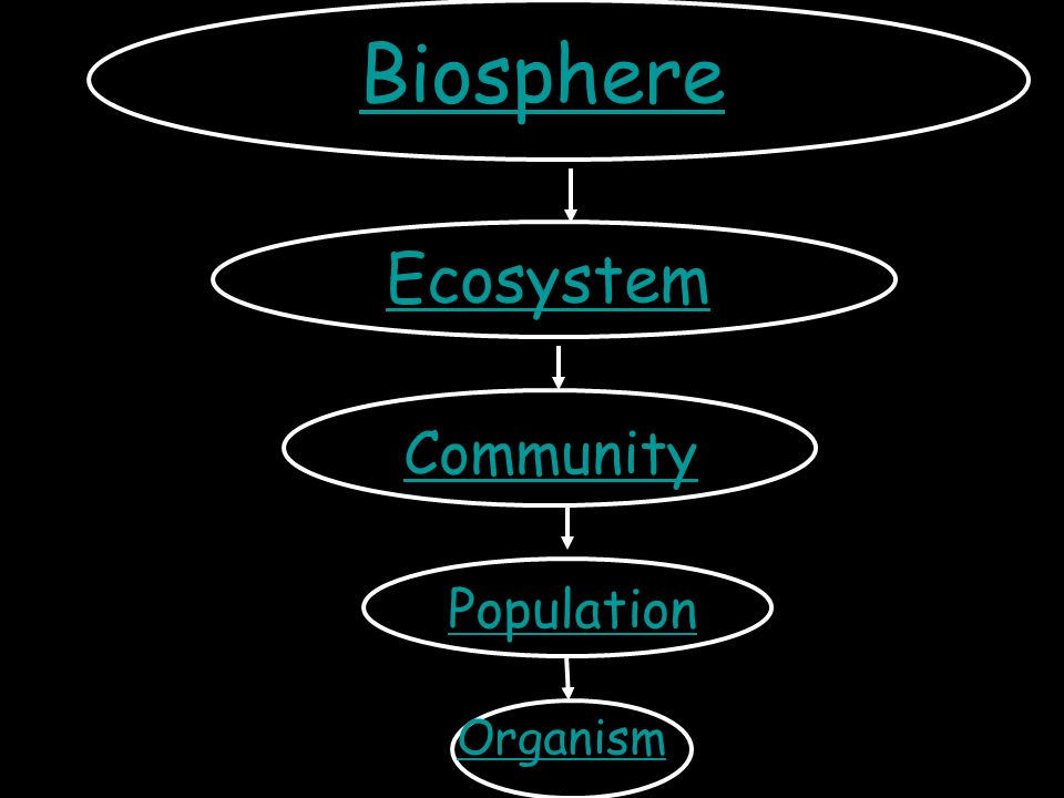 Ecology unit chapters ppt download biosphere ecosystem community population organism ccuart Gallery