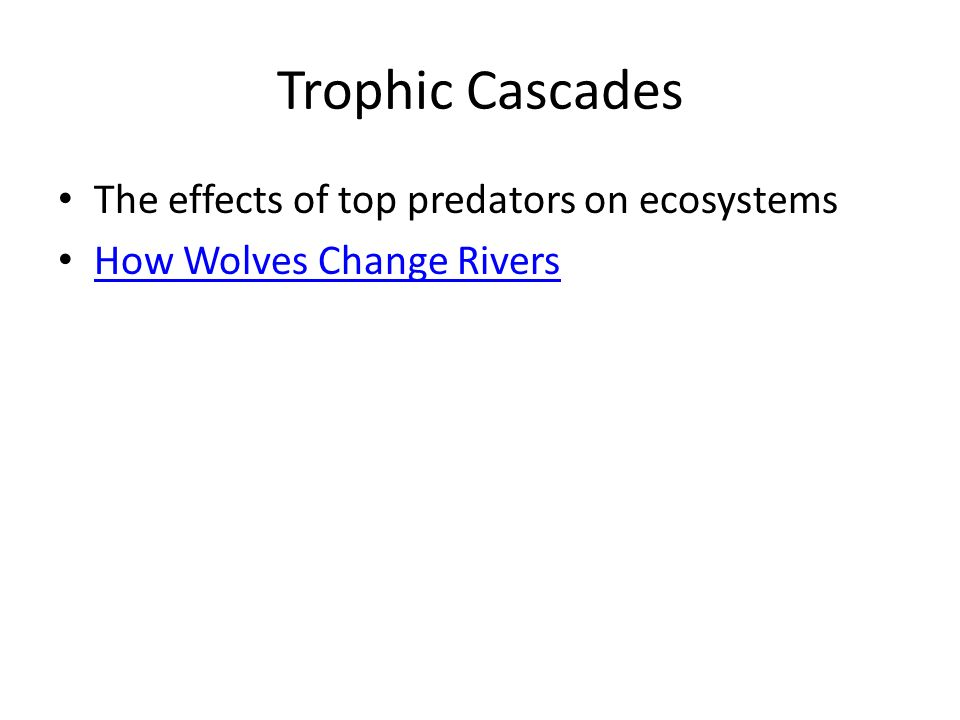 the effects of wolf predation on prey populations of large ungulates Questions about the important ecosystem effects of wolves are also emerging as   wolves been on population dynamics of large-ungulate prey, including elk.